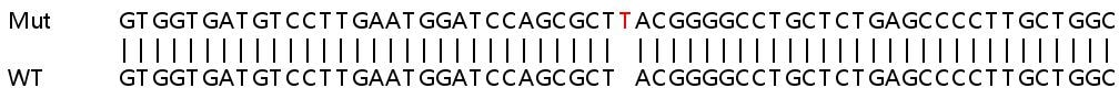 Sanger Sequencing - Human TSSK4 knockout HeLa cell line (ab266012)