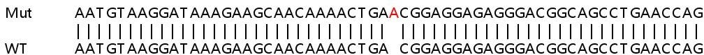 Sanger Sequencing - Human FYN knockout HEK293T cell line (ab266133)