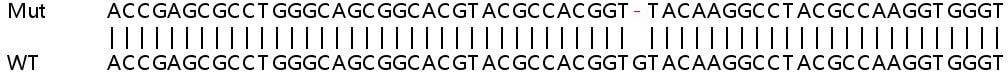 Sanger Sequencing - Human ULK3 knockout HEK293T cell line (ab266152)