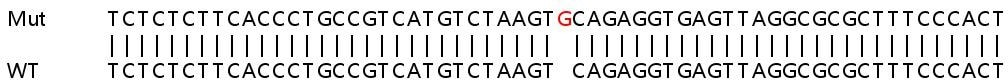 Sanger Sequencing - Human HNRNPA1 knockout HEK293T cell line (ab266193)