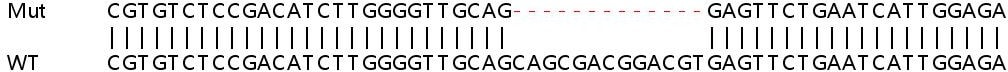 Sanger Sequencing - Human SLC25A38 knockout HEK293T cell line (ab266194)