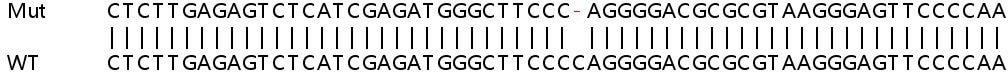 Sanger Sequencing - Human UBXN1 knockout HEK293T cell line (ab266197)