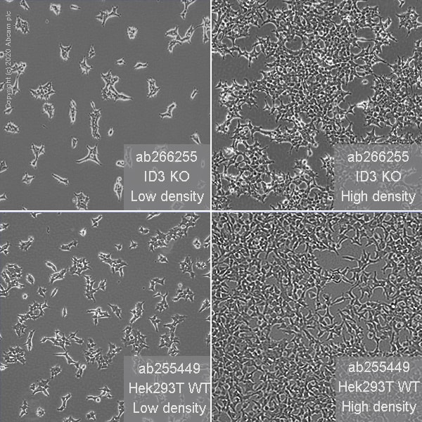 Cell Culture - Human ID3 knockout HEK293T cell line (ab266255)