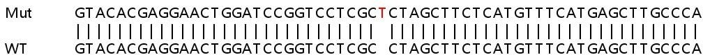 Sanger Sequencing - Human MAPK12 knockout HEK293T cell line (ab266280)