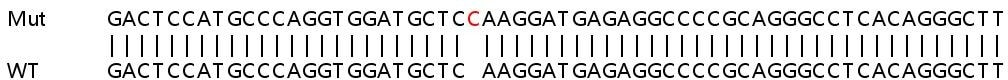 Sanger Sequencing - Human CAMKK2 knockout HEK293T cell line (ab266300)