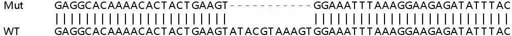 Sanger Sequencing - Human CD47 knockout HEK293T cell line (ab266324)