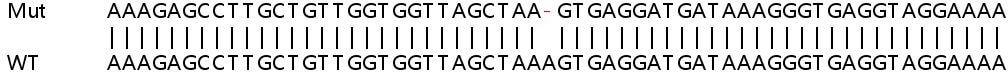 Sanger Sequencing - Human FMR1 knockout HEK293T cell line (ab266373)