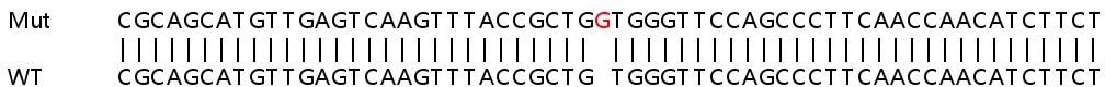 Sanger Sequencing - Human ALDH18A1 knockout HEK293T cell line (ab266378)
