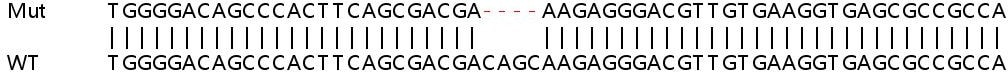 Sanger Sequencing - Human TRABD knockout HEK293T cell line (ab266476)