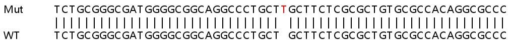 Sanger Sequencing - Human TMED4 knockout HEK293T cell line (ab266576)