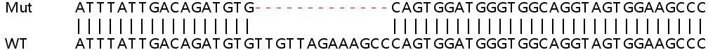 Sanger Sequencing - Human NCAPG2 knockout HEK293T cell line (ab266636)
