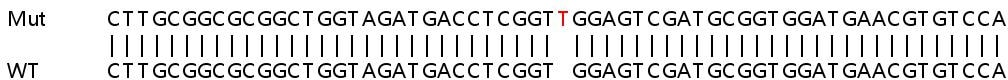 Sanger Sequencing - Human STK11 knockout HEK293T cell line (ab266647)