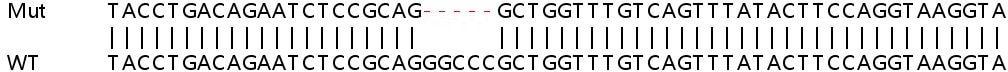 Sanger Sequencing - Human POMGNT1 knockout HEK293T cell line (ab266788)
