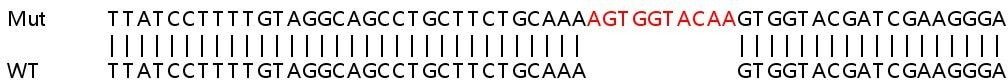 Sanger Sequencing - Human PTGES3 knockout HEK293T cell line (ab266791)