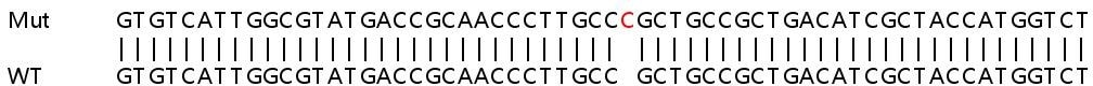 Sanger Sequencing - Human SUCLG1 knockout HEK293T cell line (ab266797)