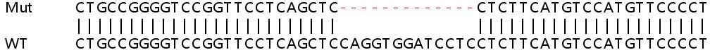 Sanger Sequencing - Human ANP32B knockout HEK293T cell line (ab266818)