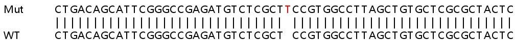 Sanger Sequencing - Human B2M knockout HEK293T cell line (ab266828)