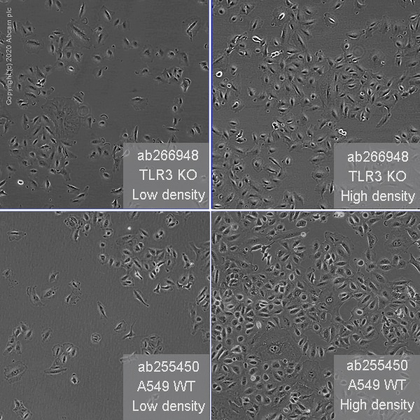 Other - Human TLR3 knockout A549 cell line (ab266948)