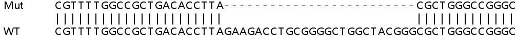 Sanger Sequencing - Human PLEKHA4 knockout A549 cell line (ab266978)