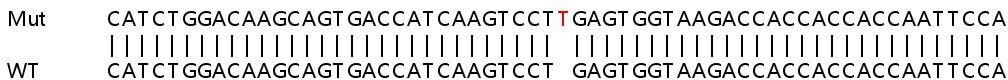 Sanger Sequencing - Human CD274 knockout A549 cell line (ab267055)