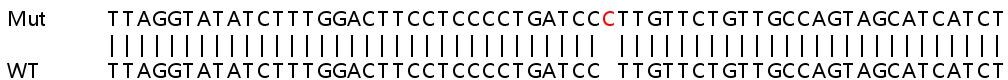 Sanger Sequencing - Human IL7 knockout A549 cell line (ab267106)