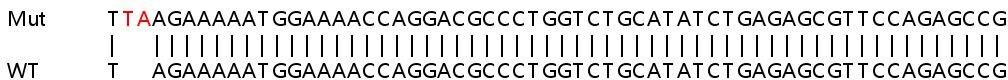 Sanger Sequencing - Human FLT3 knockout HeLa cell line (ab267227)