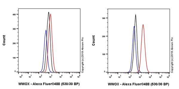 Flow Cytometry (Intracellular) - Anti-WWOX antibody [EPR23109-138] - BSA and Azide free (ab267348)