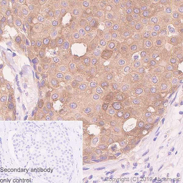 Immunohistochemistry (Formalin/PFA-fixed paraffin-embedded sections) - Anti-WWOX antibody [EPR23109-138] - BSA and Azide free (ab267348)