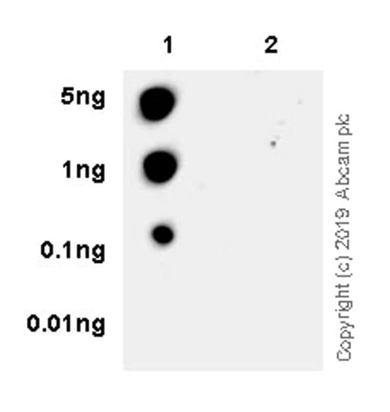 Dot Blot - Anti-IRE1 (phospho S724) antibody [EPR23107-16] - BSA and Azide free (ab267395)