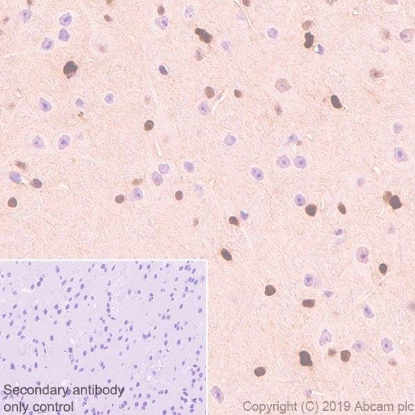 Immunohistochemistry (Formalin/PFA-fixed paraffin-embedded sections) - Anti-ADK antibody [EPR23166-143] - BSA and Azide free (ab267400)