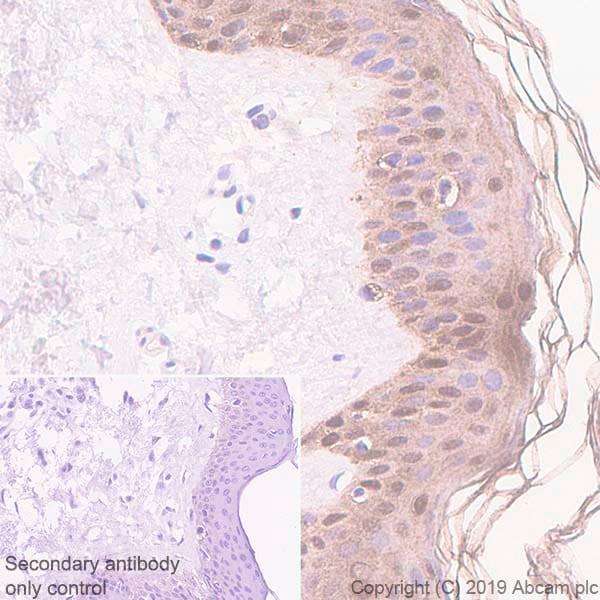 Immunohistochemistry (Formalin/PFA-fixed paraffin-embedded sections) - Anti-SerpinB2/PAI-2 antibody [EPR22924-56] (ab267463)