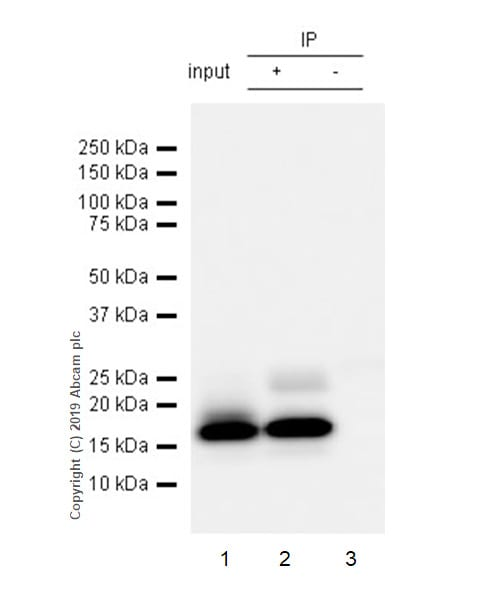 Immunoprecipitation - Anti-TFF2 antibody [EPR23231-208] (ab267474)