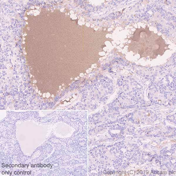 Immunohistochemistry (Formalin/PFA-fixed paraffin-embedded sections) - Anti-Apo-H antibody [EPR23087-228] - BSA and Azide free (ab267790)