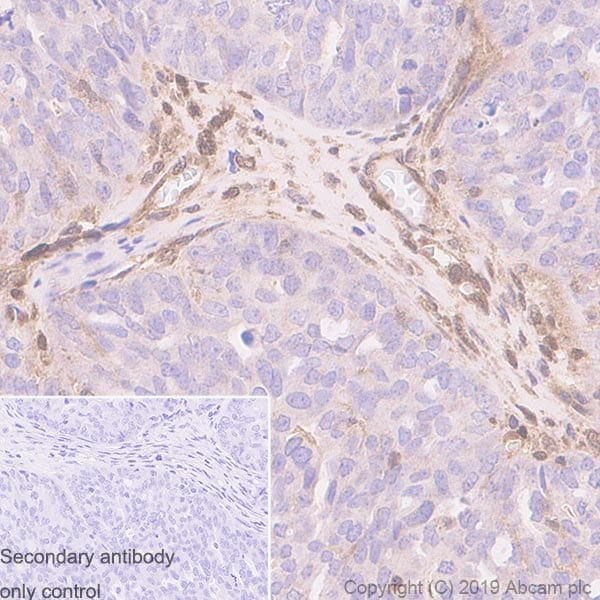 Immunohistochemistry (Formalin/PFA-fixed paraffin-embedded sections) - Anti-PTEN antibody [EPR22636-122] - BSA and Azide free (ab267791)