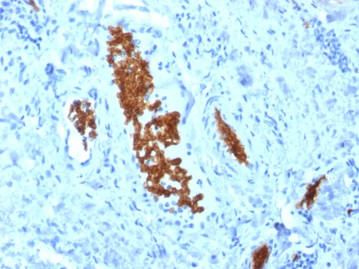 Immunohistochemistry (Formalin/PFA-fixed paraffin-embedded sections) - Anti-alpha 1 Spectrin antibody [SPTA1/1810] (ab268114)