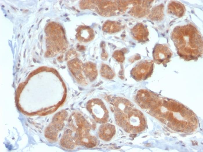 Immunohistochemistry (Formalin/PFA-fixed paraffin-embedded sections) - Anti-STAT5b antibody [STAT5B/2611] (ab268115)