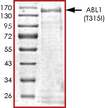 SDS-PAGE -  ABL1 protein (ab268309)