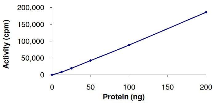 Functional Studies - Recombinant human AKT2 protein (Active) (ab268317)