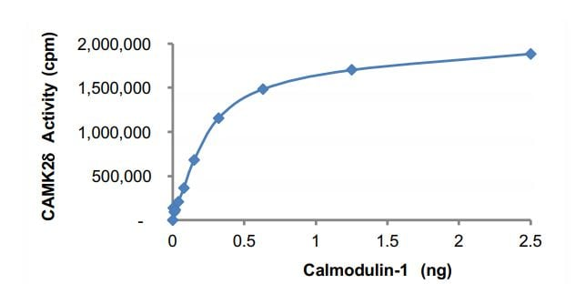 Functional Studies - Recombinant human CALM1 protein (Active) (ab268375)
