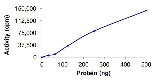 Functional Studies - Recombinant human DCAMKL1 protein (Active) (ab268437)