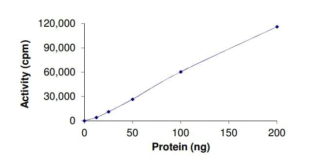 Functional Studies - Recombinant human DYRK4 protein (Active) (ab268452)