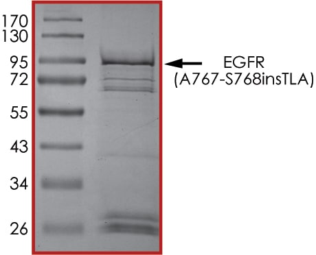 SDS-PAGE - Recombinant human EGFR (A767-S768insTLA) protein (Active) (ab268457)