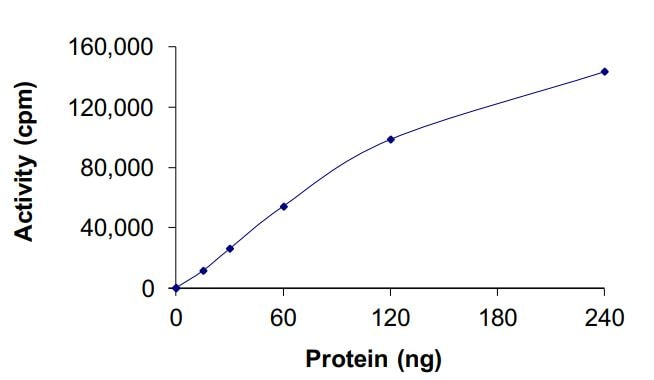 Functional Studies - Recombinant EGFR (mutated C797 A) protein (Active) (ab268463)