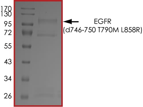 SDS-PAGE - Recombinant human EGFR deletion 746-750 (mutated T790 M + L858 R) protein (Active) (ab268467)