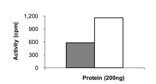 Functional Studies - Recombinant human EGFR (H773_V774insH) protein (ab268485)
