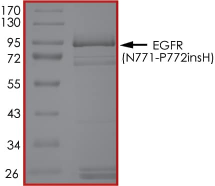 SDS-PAGE - Recombinant human EGFR(N771-P772insH) protein (Active) (ab268504)