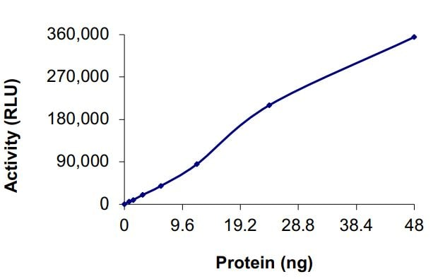 Functional Studies - Recombinant EGFR (mutated R999 A) protein (Active) (ab268505)