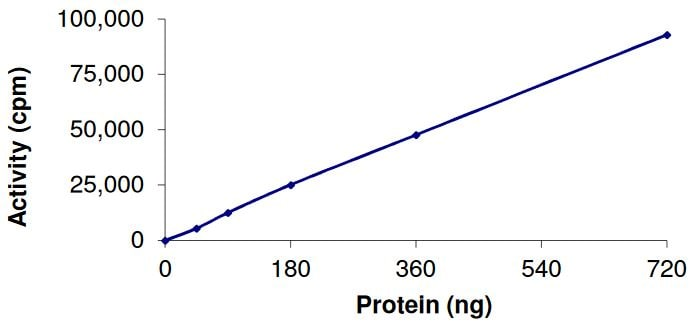 Functional Studies - Recombinant human Eph receptor A6 protein (Active) (ab268529)