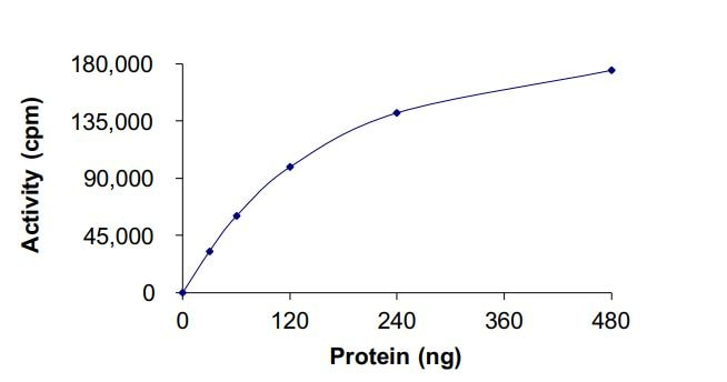 Functional Studies - Recombinant human Flt3 / CD135 (mutated N676 K) protein (Active) (ab268583)