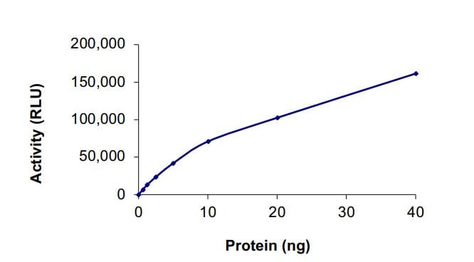 Functional Studies - Recombinant human ErbB 2 (mutated ) protein (Active) (ab268630)